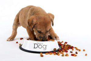 Dicas-para-alimentar-corretamente-um-filhote-de-cachorro